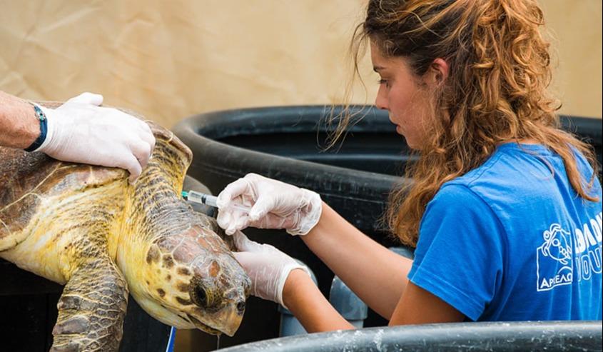 ARCHELON - Schildkrötenschutz in Griechenland